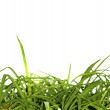 Grass growing indoors — Stock fotografie