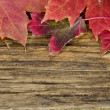 Autumn leaves on the background of a old wood floor — Stock Photo