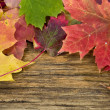 Autumn leaves on the background of a old wood floor — Stock Photo #14763769