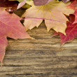 Autumn leaves on the background of a old wood floor — Stock Photo #14763819