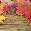 Stock Photo: Autumn leaves on the background