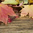 Autumn leaves on the background — Stock Photo #14763843