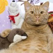 Fat orange cat with his toy otter — Stockfoto
