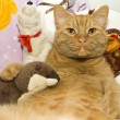 Fat orange cat with his toy otter - Stock Photo