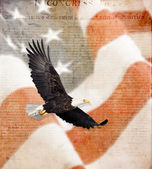 American Flag, flying bald Eagle and Constitution montage — Stock Photo