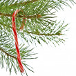 Christmas candy cane on pine branch isolated on white — Stock Photo