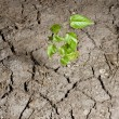 Stock Photo: Green plant in ground