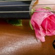 Royalty-Free Stock Photo: Rose on cello
