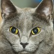 Cat looking away — Stock Photo