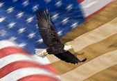 Close up of bald eagle flying in front of american flag with vertical stripes and tight depth of field — Stok fotoğraf