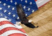 Närbild på skallig örn flyger framför amerikanska flaggan med vertikala ränder och snäva skärpedjup — Stockfoto