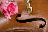Rose on cello — Stock Photo