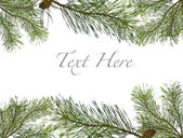 Twig of evergreen fir on white — Stock Photo