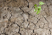 Green plant in ground — Stock Photo