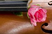 Rose on cello — Stock Photo