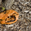 Stock Photo: Rotten pumpkin near the tree