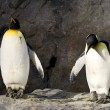 Stock Photo: Penguin