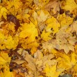 Autumn leaves — Stock Photo #19748807
