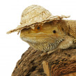 Iguana in hat isolated in white background — Stock Photo