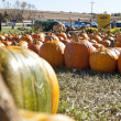Pumpkin on the field — Stock Photo