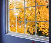 Autumn leaves at window — Stock Photo