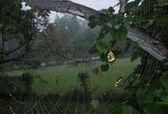 Spider web — Stock Photo