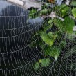 Spider web (cobweb) closeup background — Stock Photo