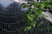 Spider web (cobweb) closeup background — Stock Photo