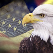 图库照片: Bald eagle with grungy looking americflag