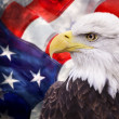 Bald eagle with the american flag — Foto de Stock