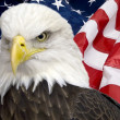 Bald eagle with american flag — Stock Photo