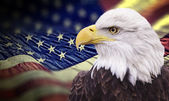 Bald eagle with grungy looking american flag — Stock Photo