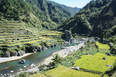 Rice fields northern luzon the philippines — Stock Photo