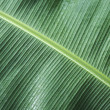 Tropical banana leaf background — Stock Photo #23134532