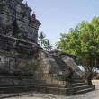 Borobudur temple banyan tree java — Stock Photo #23408462