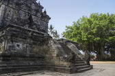 Borobudur temple banyan tree java — Stock Photo