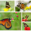 ������, ������: Butterfly Collage