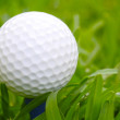 Golf Ball on Grass — Stock Photo #28134229
