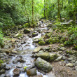 Rain Forest River — Stock Photo