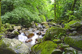 Rain Forest Stream — Stock Photo