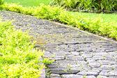 Trädgårdsgång — Stockfoto