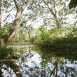 Tranquil Pond — Stock Photo