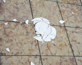 Broken plate on a tile background — Stock Photo