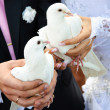 A married couple holding doves in hands. Holiday tradition — Stock Photo