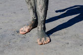 Take a mud cure. healthy medical procedure. dirty legs — Stock Photo