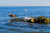 One seagull stending on steady stones in a sea — Stock Photo