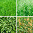 Stock Photo: Green summer grass backgrounds