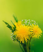 Bunch of flowers. Yellow summer dandelions and green grass — Stok fotoğraf