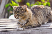Unruffled cat sitting and stern looking — Stock Photo