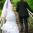 Wedding couple walk up to stairs and holding hands. backview — Stock Photo